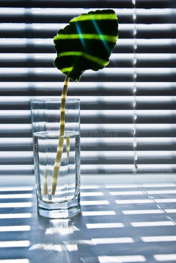Blad in glas 2 royalty-vrije stock foto's