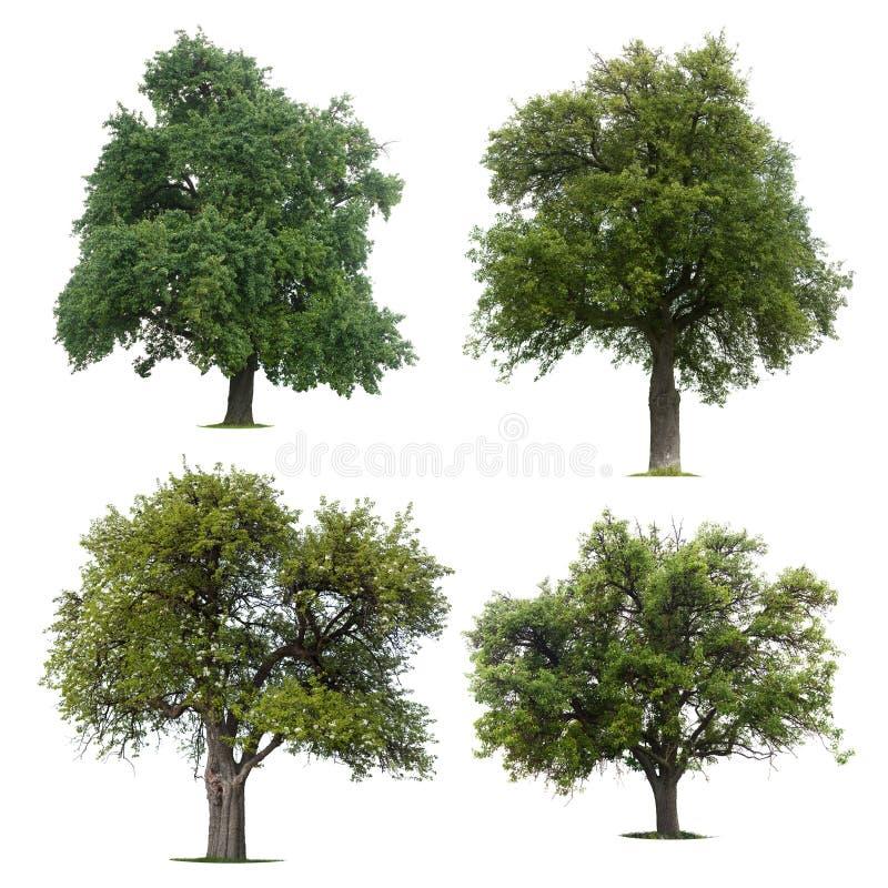 Blad groene bomen royalty-vrije stock fotografie