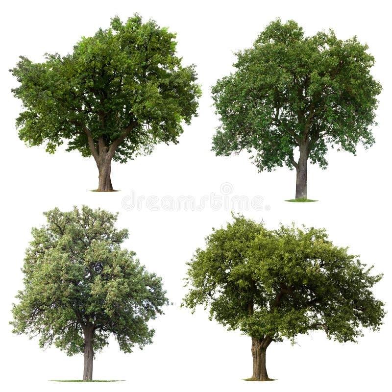 Blad groene bomen royalty-vrije stock afbeeldingen