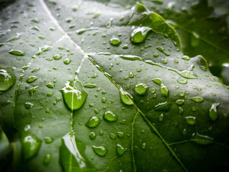 Blad i regndropparna arkivfoton