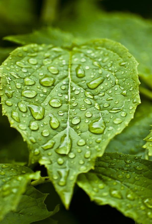 Blad met regendalingen