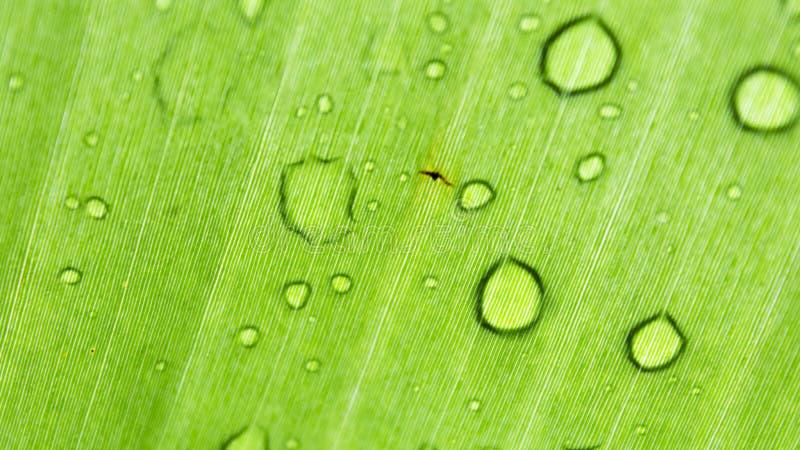 Blad met regendruppels stock fotografie