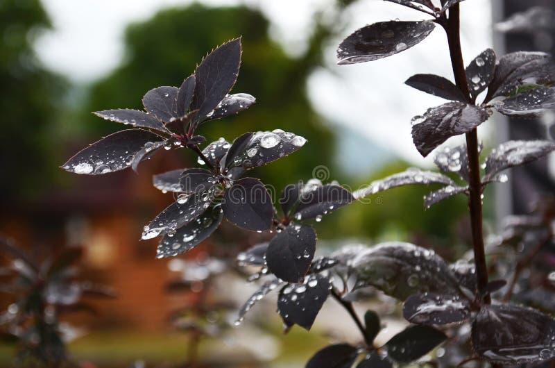 Blad met waterdalingen stock fotografie
