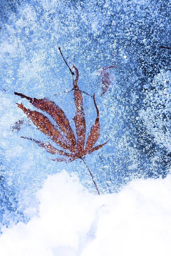 Blad och bubblor som frysas i is