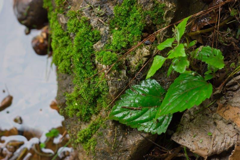 Blad och mullvad på stenar nära vattnet Naturlig bakgrund royaltyfri foto