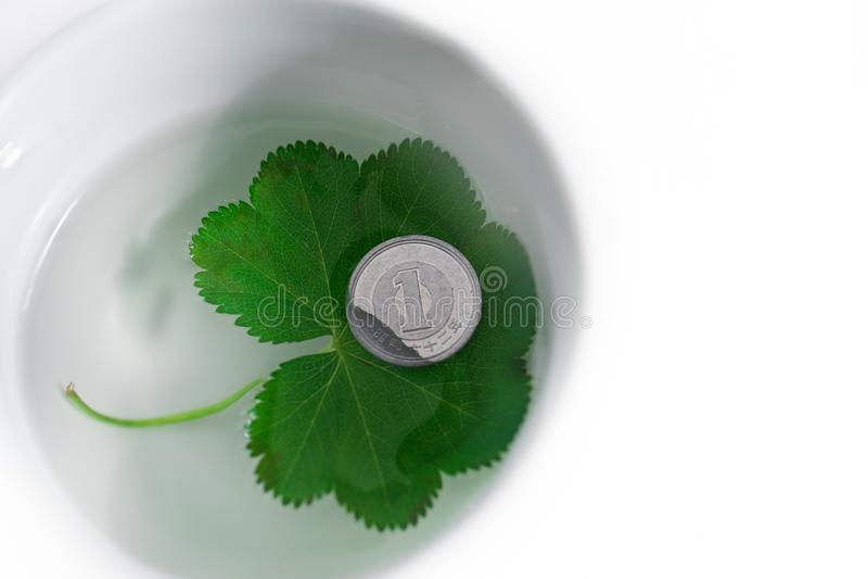 Blad och mynt arkivbilder
