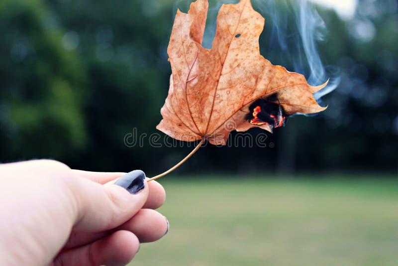 Blad op brand stock afbeelding