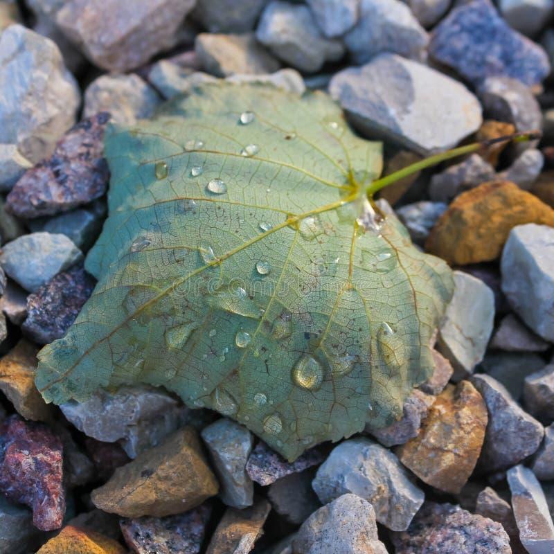Blad op de stenen Het de herfstblad van de kalk ligt op grav royalty-vrije stock afbeelding
