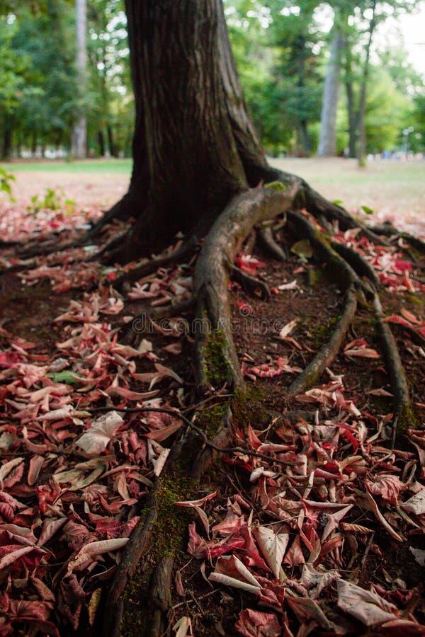 Blad runt om träd arkivfoton