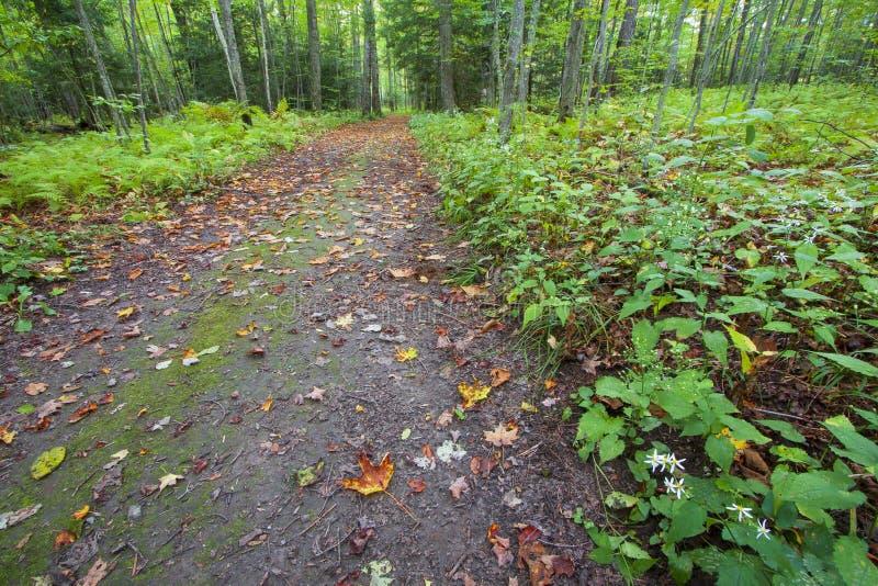 Blad uitgestrooide weg door trillend groen bos royalty-vrije stock afbeeldingen