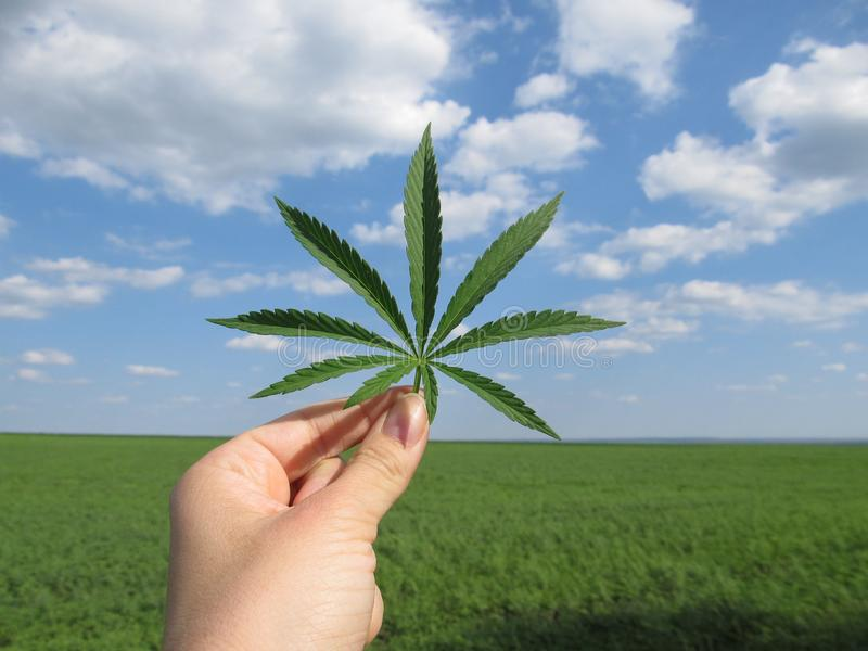 Blad van cannabis in de hand tegen een blauwe bewolkte hemel en een groen gebied stock foto