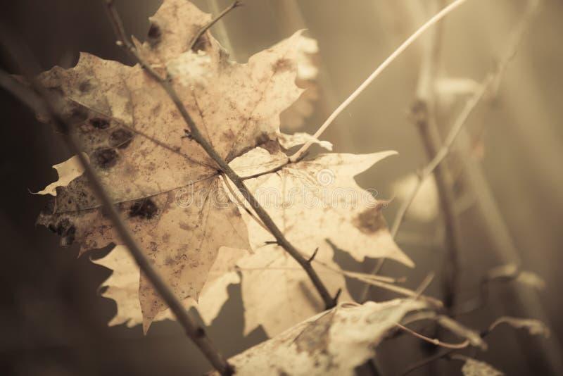Download Blad Van De Close-up Het Herfst Natte Esdoorn In Bos Stock Afbeelding - Afbeelding bestaande uit naughty, park: 54091277