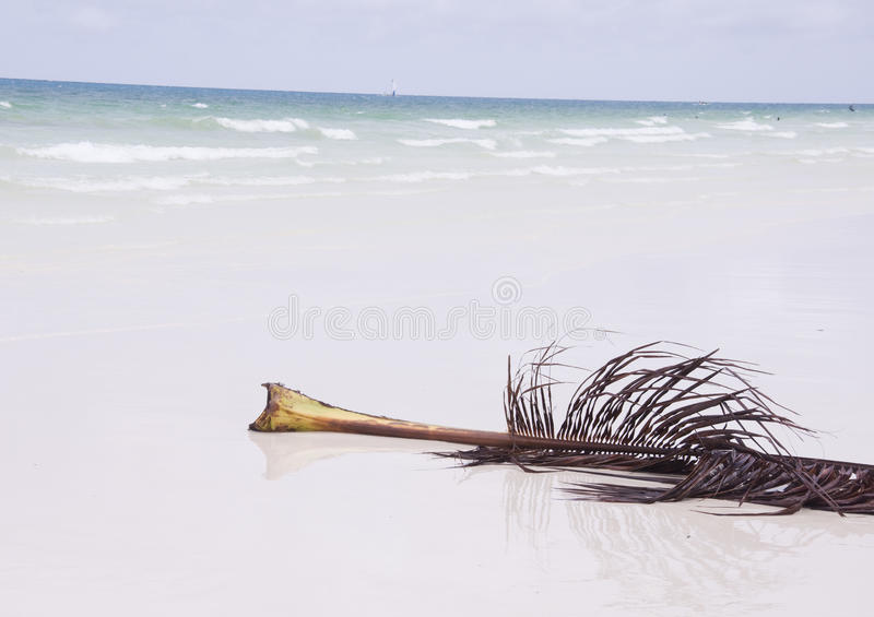 Blad van palm royalty-vrije stock foto's