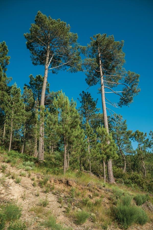 Bladbomen en struiken die de heuvel uitgaan royalty-vrije stock foto's