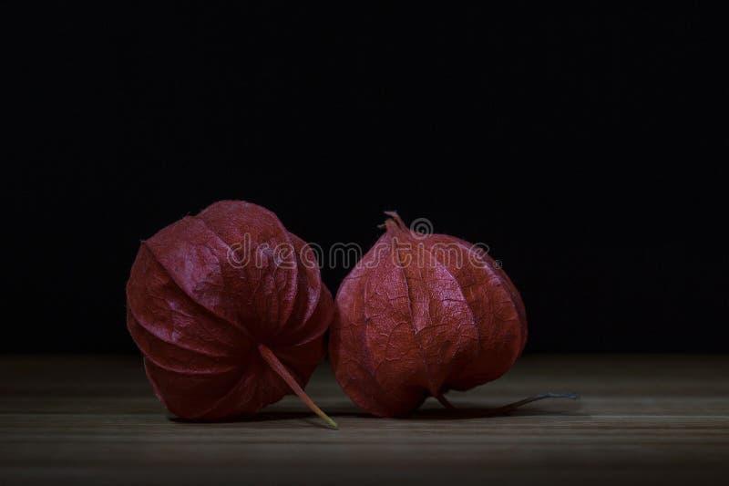 Bladder, Cherry, Chinese royalty free stock image