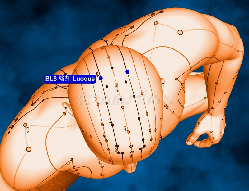 Acupuncture Point BL8 Luoque, 3D Illustration, Blue Background stock images