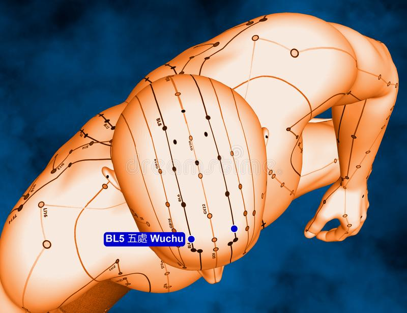 Acupuncture Point BL5 Wuchu, 3D Illustration, Blue Background stock images
