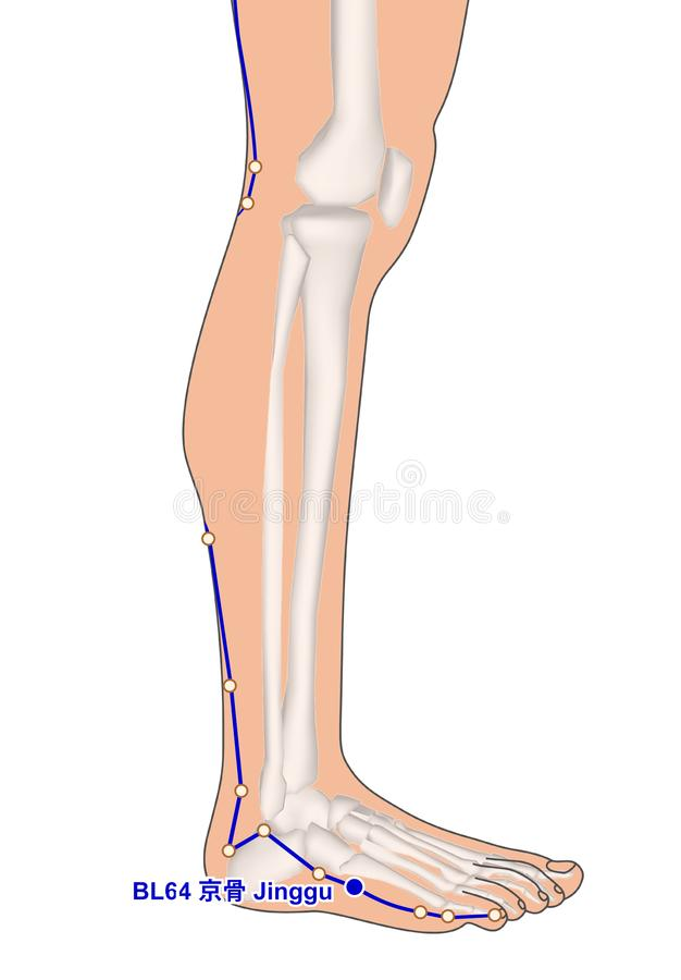 Drawing with Skeleton, Acupuncture Point BL64 Jinggu, 3D Illustration royalty free stock photo