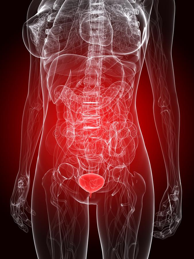 bladder podkreślający ilustracja wektor