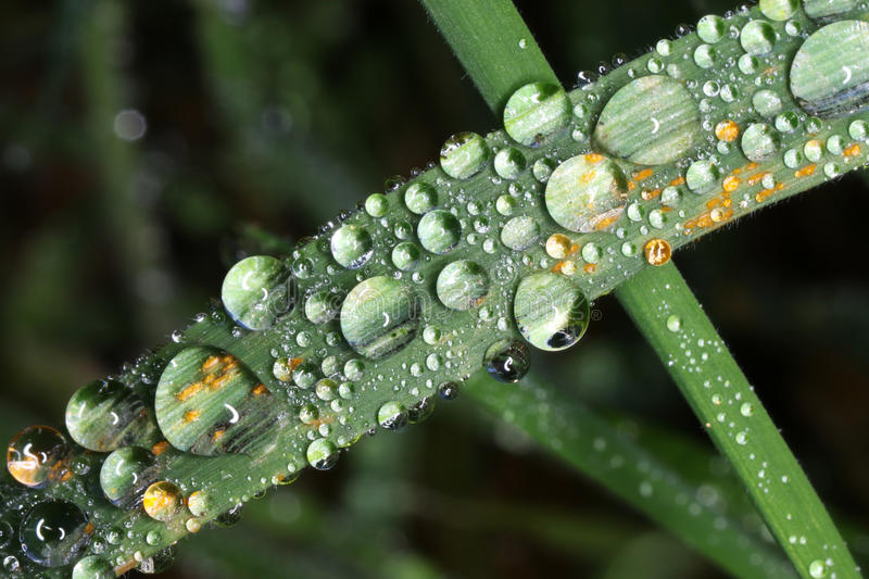 Blade of grass with waterdrops royalty free stock photography