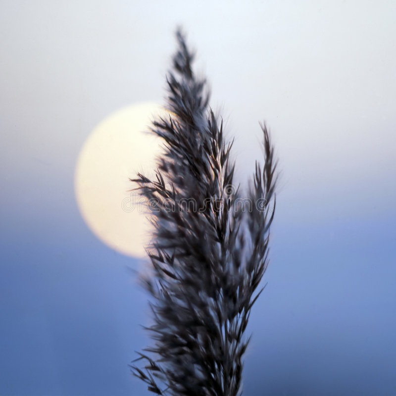 Free Blade Of Grass At Sunset Royalty Free Stock Image - 2521096