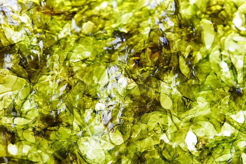 Bladen van het Nori de droge zeewier royalty-vrije stock afbeeldingen