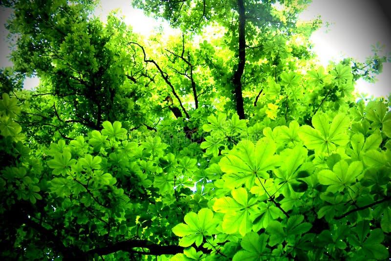 Download Bladeren stock foto. Afbeelding bestaande uit hout, licht - 28516