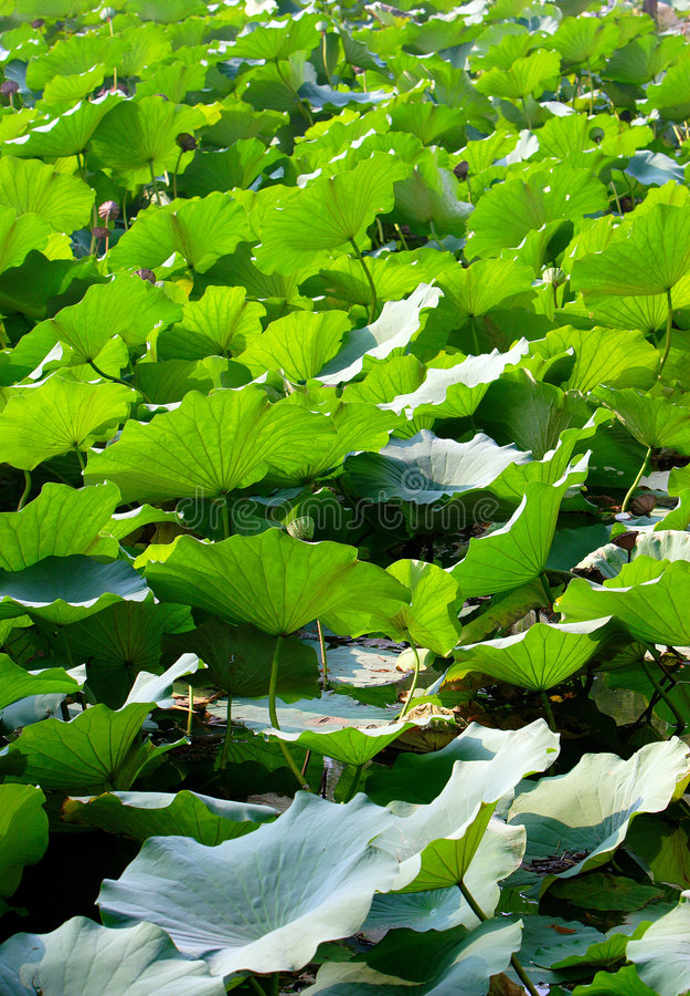 Bladeren stock foto