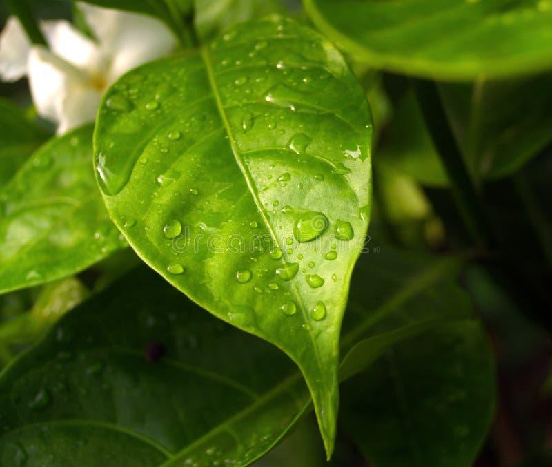 Bladeren stock afbeelding