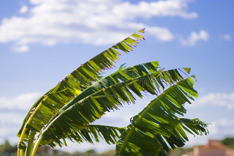 Bladeren aan de wind stock afbeelding