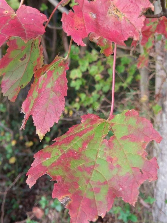 Bladeren bij de verandering van seizoen royalty-vrije stock afbeeldingen