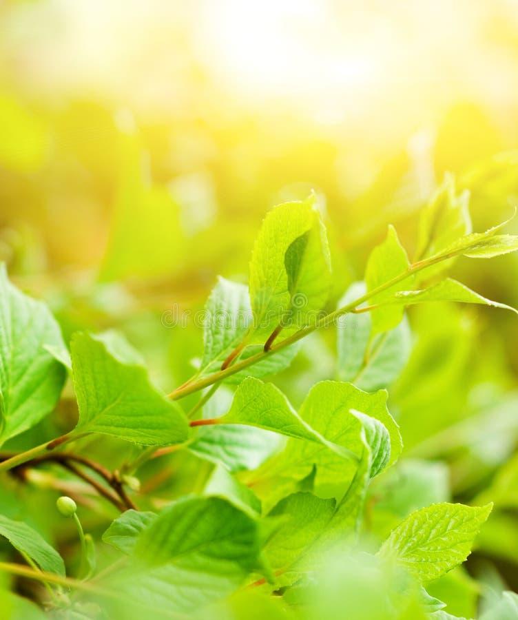 Bladeren bij zonnige dag stock afbeeldingen
