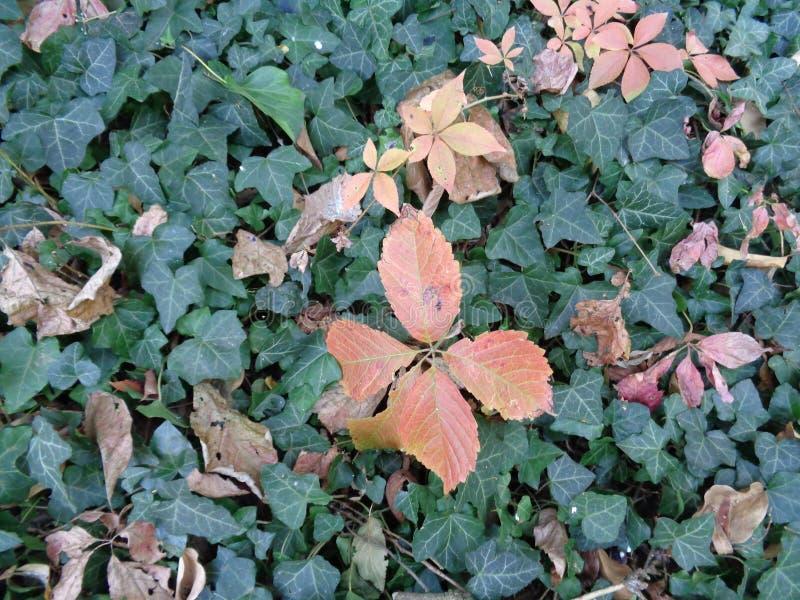 Bladeren, clouseup bij botanische tuin - Macea, Arad-provincie, Roemenië stock afbeelding