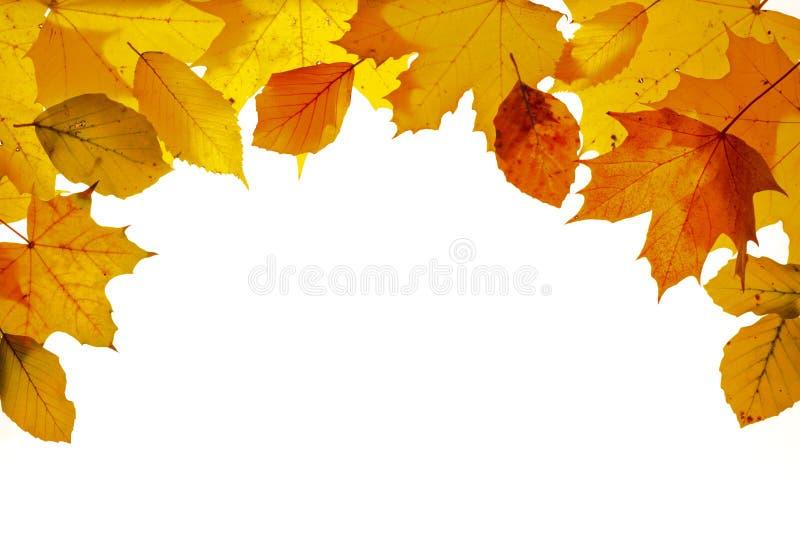 Bladeren in de herfst royalty-vrije stock foto