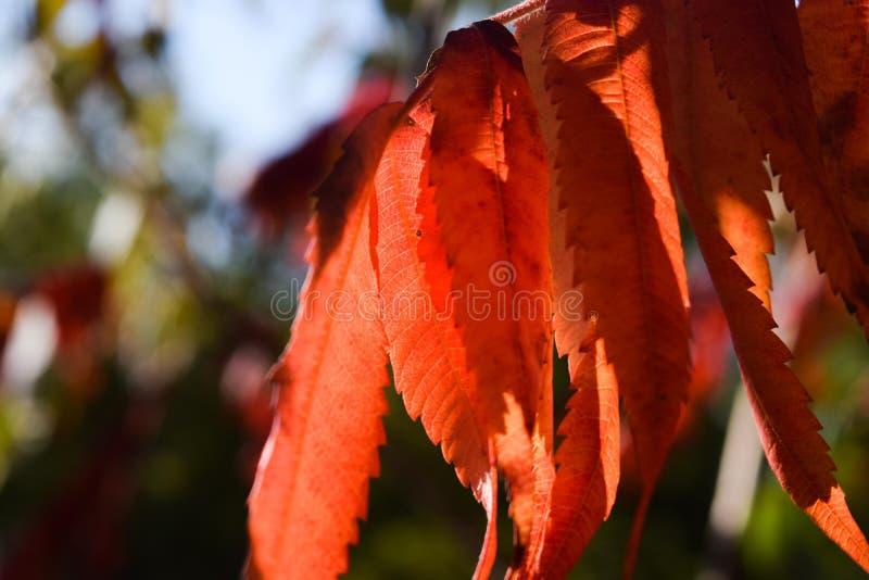 Bladeren in de herfst stock fotografie