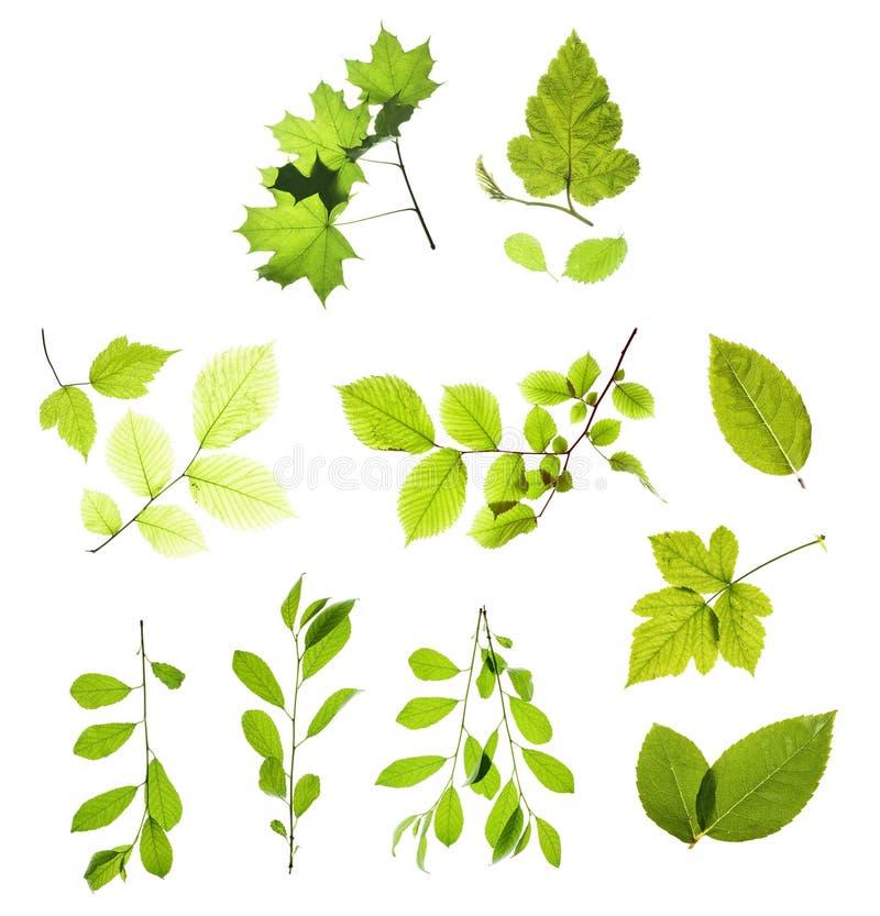 Bladeren die op wit worden geïsoleerdl stock foto's