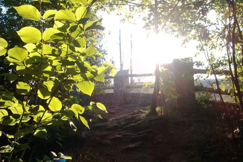 Bladeren die in zonlicht gloeien stock afbeeldingen