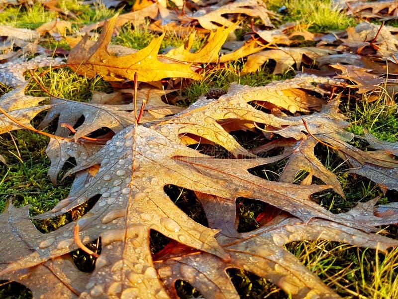Bladeren in een park met waterdrops stock foto's