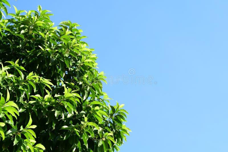 Bladeren en blauwe hemel royalty-vrije stock foto
