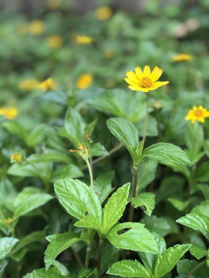 Bladeren en bloemen royalty-vrije stock afbeeldingen