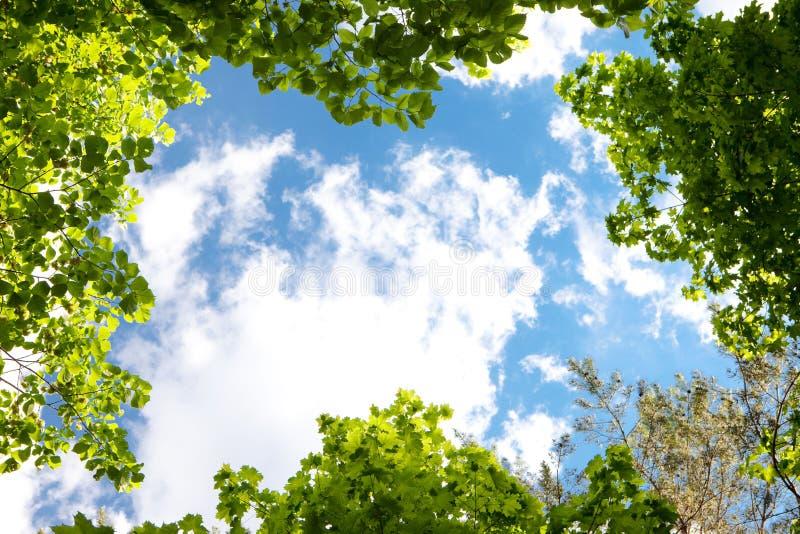 Bladeren en hemel royalty-vrije stock afbeeldingen