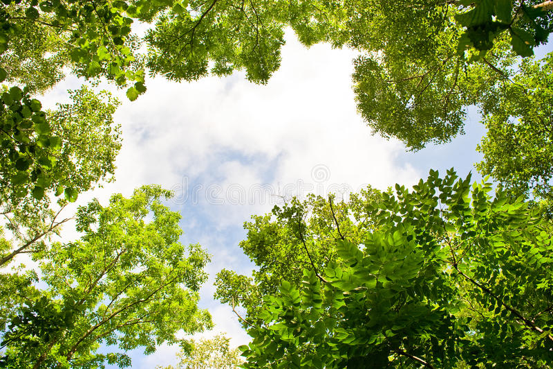 Bladeren en hemel stock fotografie