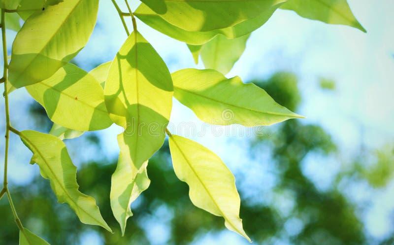 Bladeren en Schaduw stock afbeeldingen