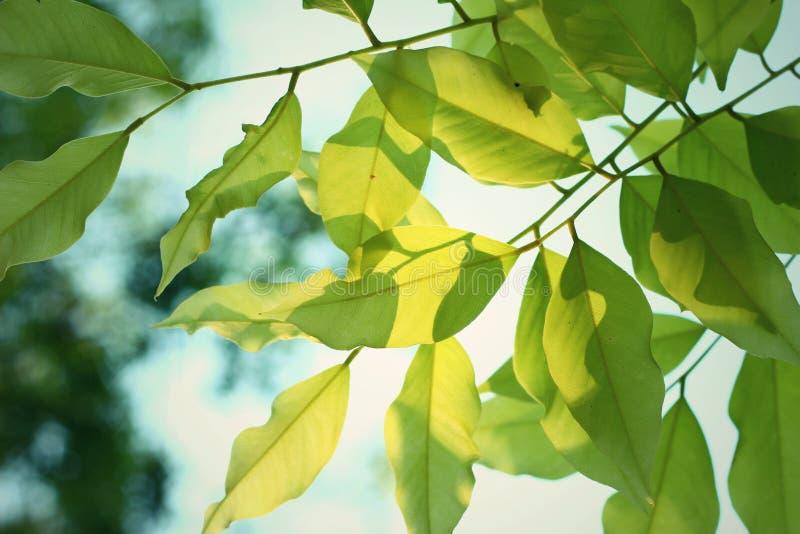 Bladeren en Schaduw royalty-vrije stock afbeelding