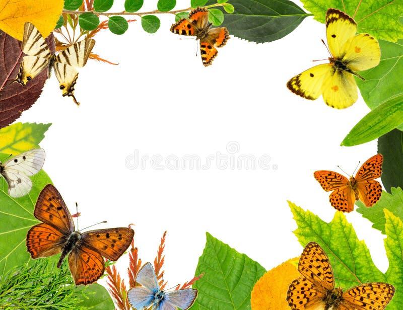 Bladeren en vlinders royalty-vrije stock afbeeldingen