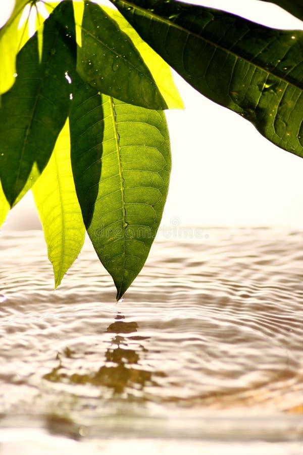 Bladeren en water royalty-vrije stock foto