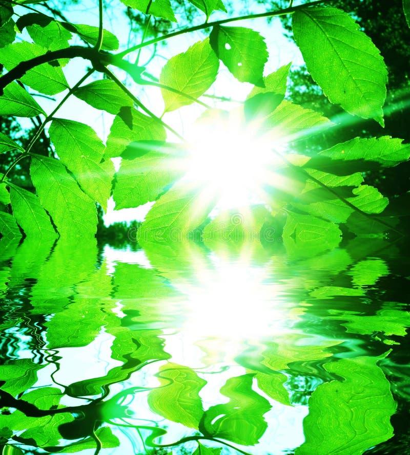 Bladeren en zon royalty-vrije stock foto