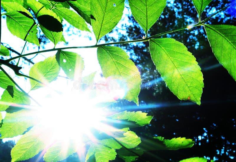 Bladeren en zon royalty-vrije stock foto's