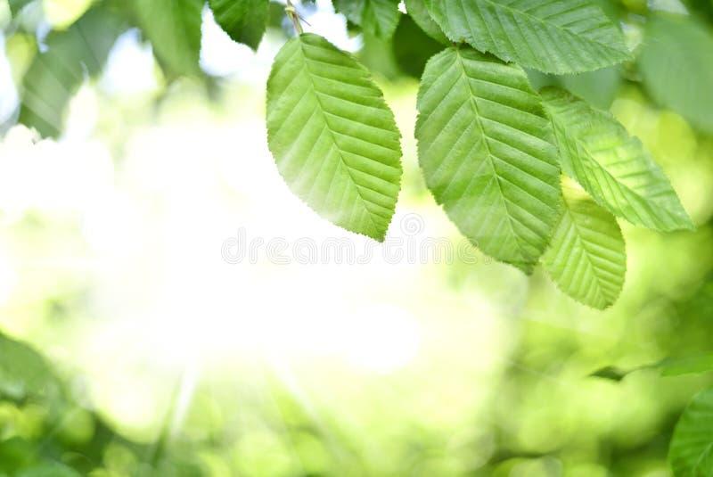 Bladeren en zon in een bos stock foto