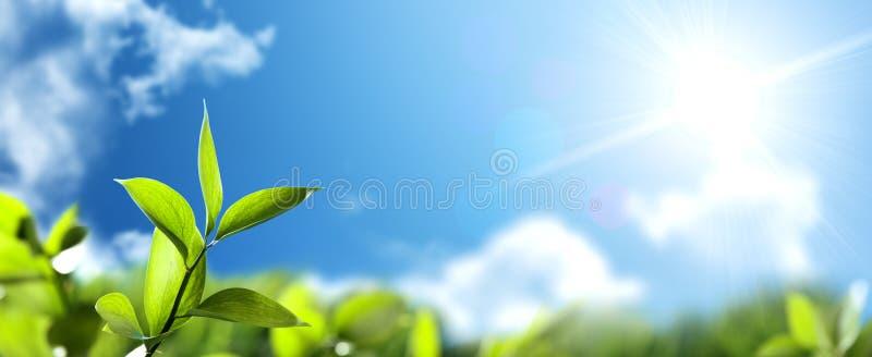 Bladeren en zonnige hemel royalty-vrije stock fotografie